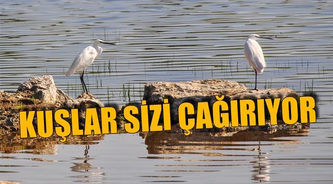 """""""kuşlar sizi çağırıyor"""" ile ilgili görsel sonucu"""