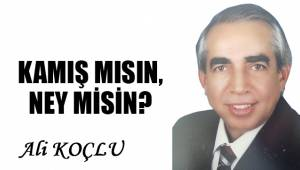 KAMIŞ MISIN, NEY MİSİN?