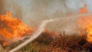 Aktepe'de orman yangını
