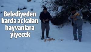 Belediyeden karda aç kalan hayvanlara yiyecek