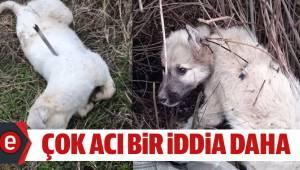 Silahla iğnelenen köpeklerin katledildiği iddiası