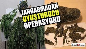 Jandarmadan uyuşturucu operasyonu