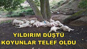 YILDIRIM DÜŞTÜ. 15 KOYUN TELEF