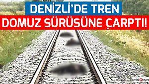 Denizli'de tren domuz sürüsüne çarptı!