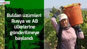 Buldan üzümleri Rusya ve AB ülkelerine gönderilmeye başlandı