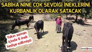 Sabiha nine ineklerini kurbanlık olarak satacak