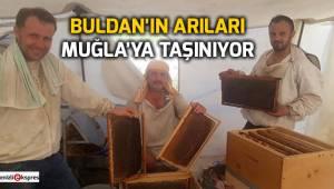 Buldan'ın arıları Muğla'ya taşınıyor