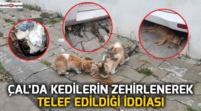Çal'da kedilerin zehirlenerek telef edildiği iddiası
