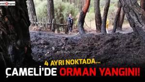 Çameli'de orman yangını!