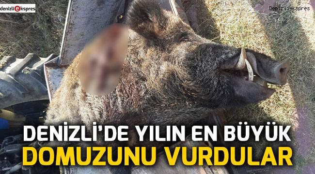 Denizli'de yılın en büyük domuzunu vurdular