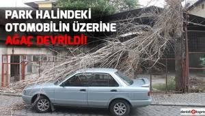 Park halindeki otomobilin üzerine ağaç devrildi!