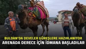 Buldan'da develer yarışlara hazırlanıyot