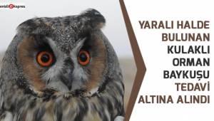 Yaralı halde bulunan kulaklı orman baykuşu tedavi altına alındı