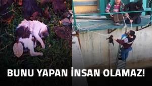 Beslediği sokak hayvanlarının zehirlendiğini iddia eden kişi polise başvurdu.