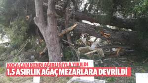 1.5 Asırlık Ağaç Mezarların Üzerine Yıkıldı