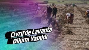 Çivril'de Lavanta Dikimi Yapıldı