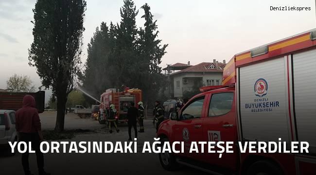 Yol ortasındaki ağacı ateşe verdiler