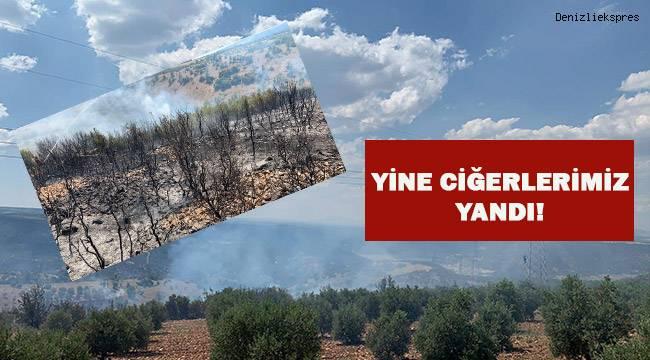 Çal'da 50 hektar orman alanı yandı