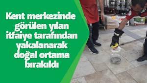 Kent merkezinde görülen yılan itfaiye tarafından yakalanarak doğal ortama bırakıldı