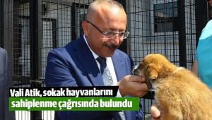 Vali Atik, sokak hayvanlarını sahiplenme çağrısında bulundu