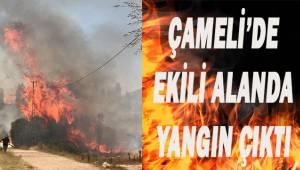 Çameli'de ekili alanda yangın