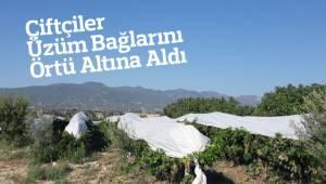 Çiftçiler Üzüm Bağlarını Örtü Altına Aldı