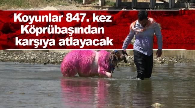 Koyunlar 847. kez Köprübaşından karşıya atlayacak