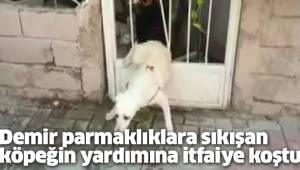 Demir parmaklıklara sıkışan köpeğin yardımına itfaiye koştu
