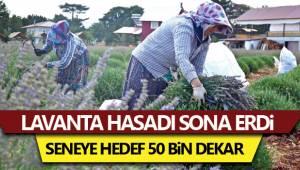 Denizli'de lavanta üretim sahasının 50 bin dekara çıkarılması hedefleniyor