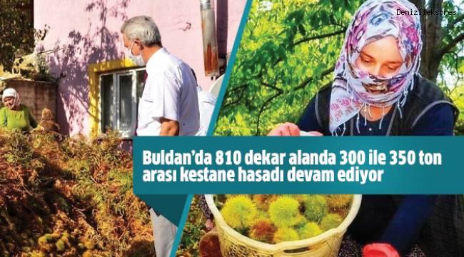 Buldan'da 810 dekar alanda 300 ile 350 ton arası kestane hasadı devam ediyor