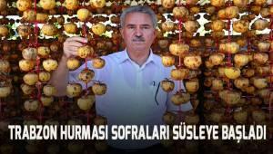 Trabzon hurmasında ilk hasat başladı