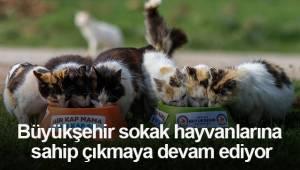 Büyükşehir sokak hayvanlarına sahip çıkmaya devam ediyor