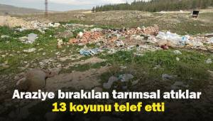 Boş araziye bırakılan tarımsal atıklar 13 koyunu telef etti