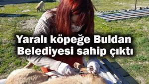 Yaralı köpeğe Buldan Belediyesi sahip çıktı