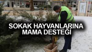 ÇAMELİ BELEDİYESİ'NDEN SOKAK HAYVANLARINA MAMA DESTEĞİ