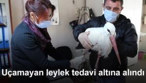 Uçamayan leylek tedavi altına alındı
