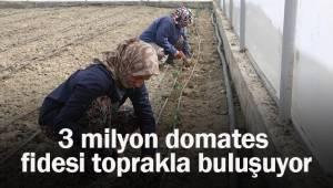 3 milyon domates fidesi toprakla buluşuyor