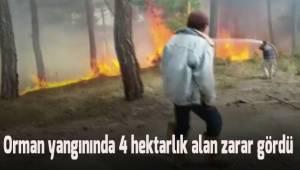 Karataş'ta çıkan orman yangınında 4 hektarlık alan zarar gördü