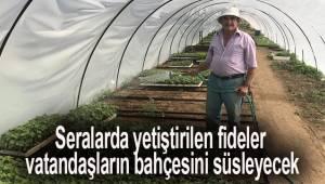 Seralarda yetiştirilen fideler, vatandaşların bahçesini süsleyecek