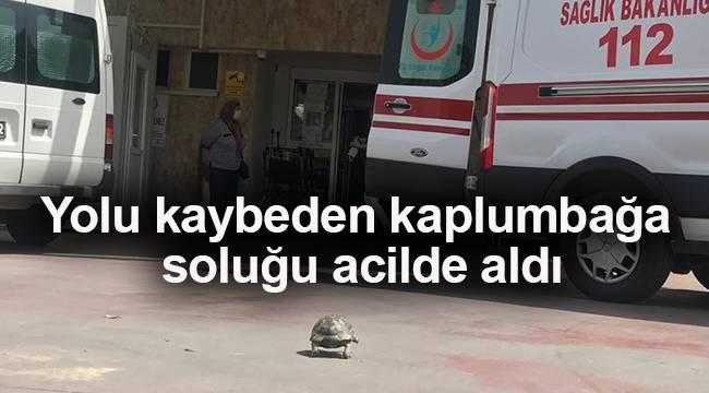 Yolu kaybeden kaplumbağa soluğu acilde aldı