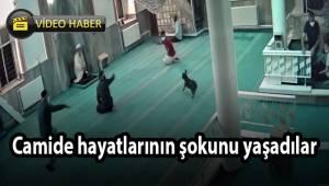 Camide hayatlarının şokunu yaşadılar