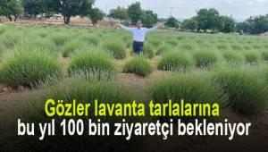 Gözler lavanta tarlalarına bu yıl 100 bin ziyaretçi bekleniyor
