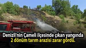 Denizli'nin Çameli ilçesinde çıkan yangında 2 dönüm tarım arazisi zarar gördü.