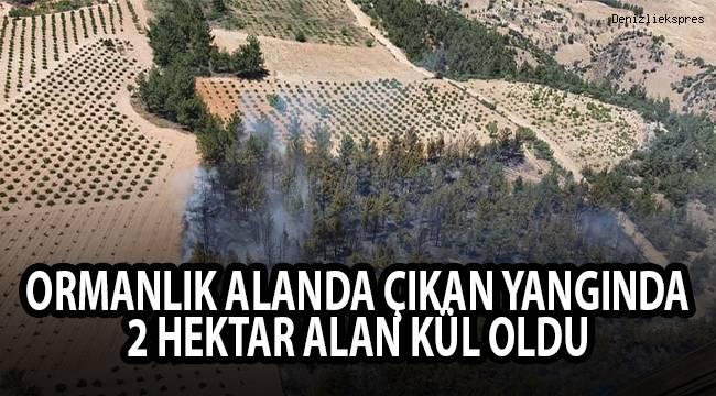 Ormanlık alanda çıkan yangında 2 hektar alan kül oldu