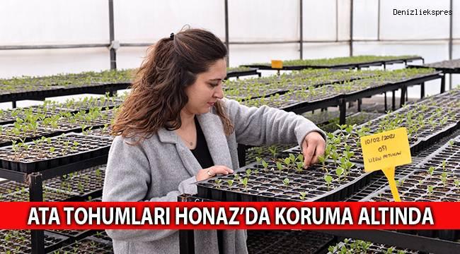 Ata tohumları Honaz'da koruma altında
